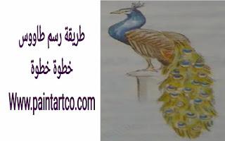 تعليم الرسم للاطفال المبتدئين رسم طاووس خطوة بخطوة Artwork Labels Animals