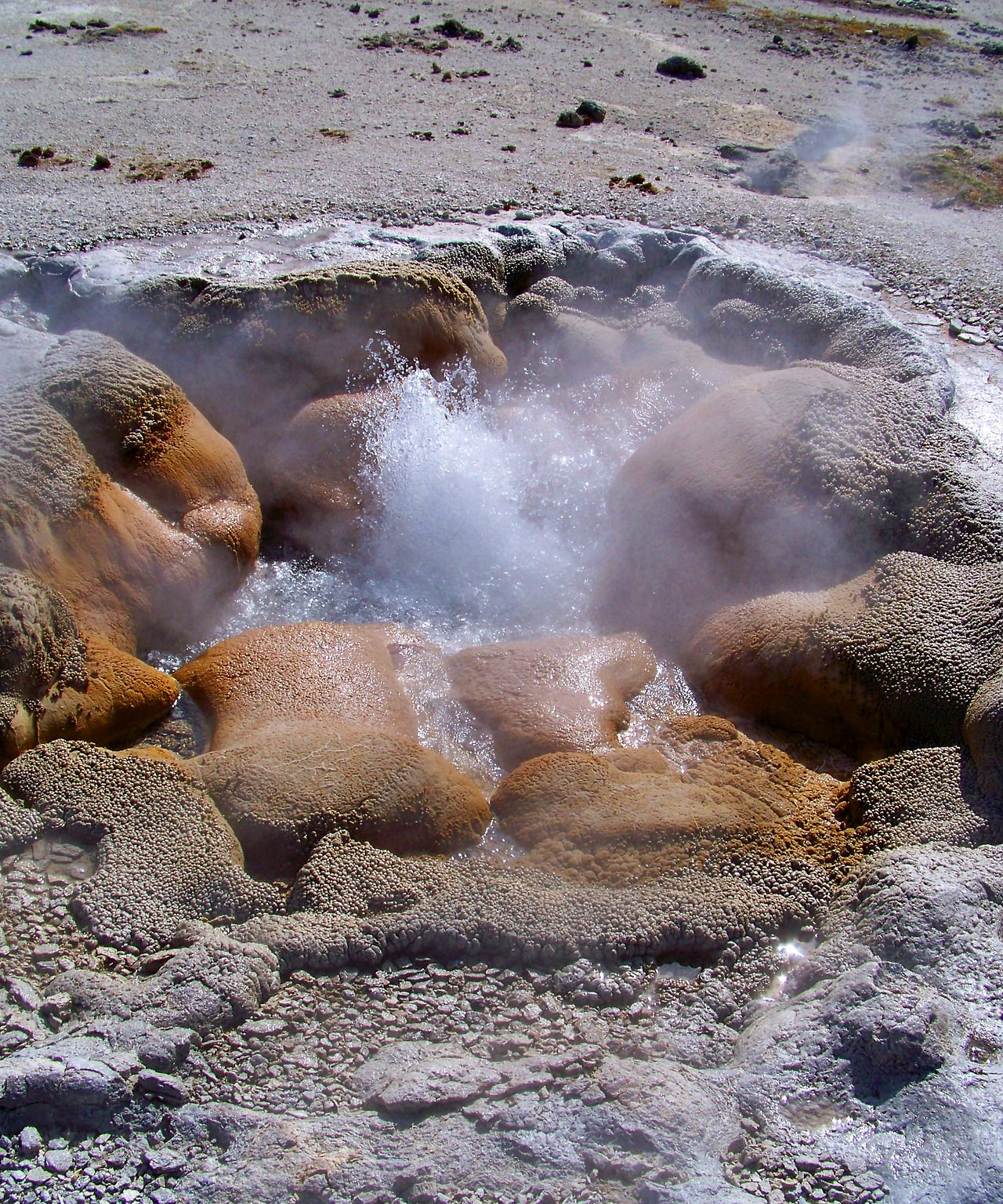 "rivermusic: ""Mustard Spring Yellowstone National Park photo by rivermusic, 2013 """