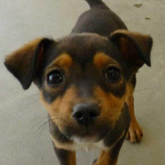 Dog Adoption San Diego Adopt A Dog Cat Adoption San Diego Adopt A Cat Dog Adoption Pet Adoption Cat Adoption