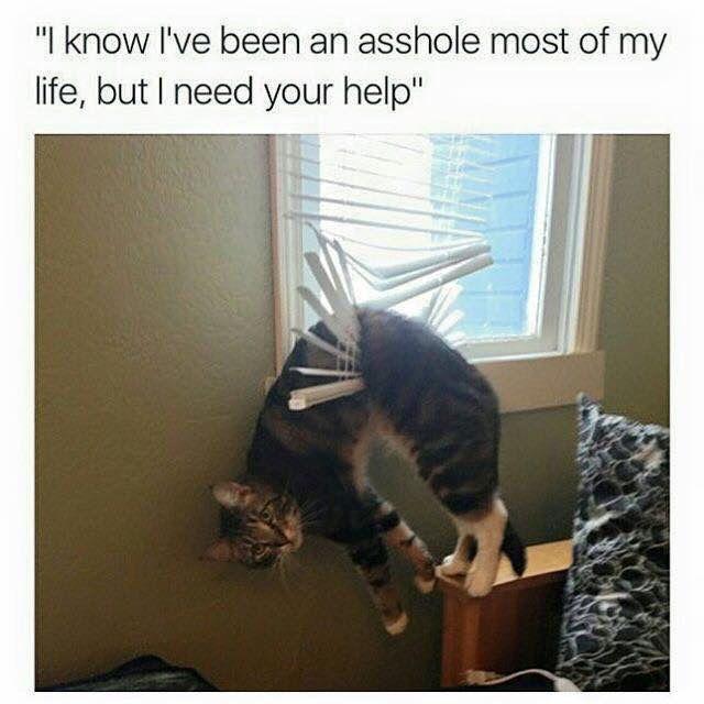 121e96e46c9c570b54a553b5ff5b45ac ik i'm an asshole but cats pinterest funny things, memes
