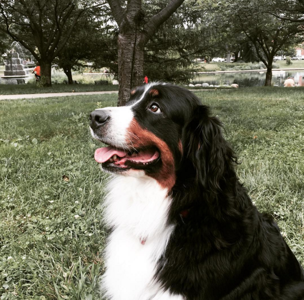 The Most Angelic Looking Dog At Goodale Park Columbus Oh