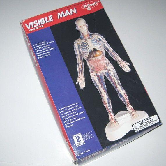 Vintage Style Visible Man Anatomy Model Kit In Original Box Models