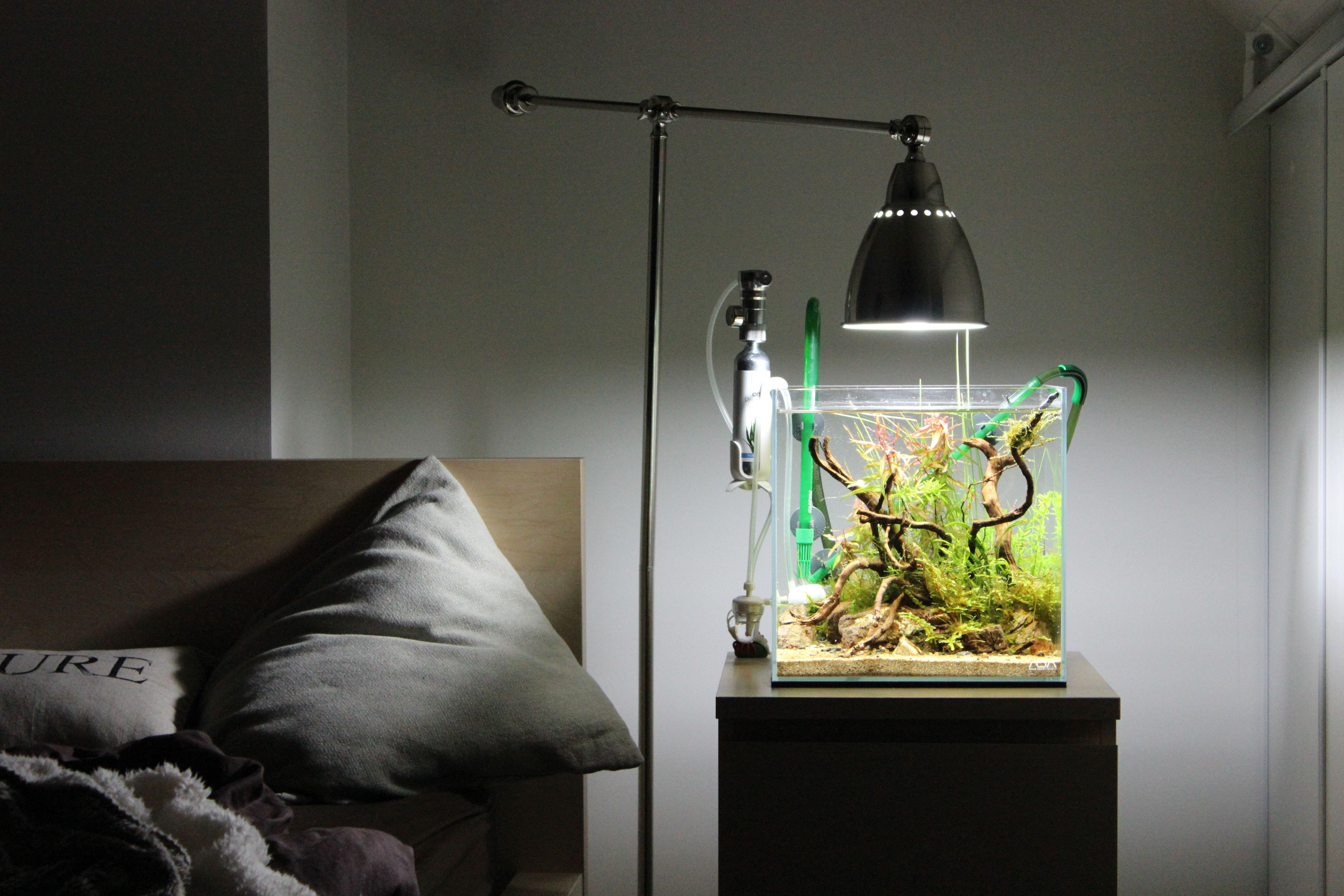 Riverbank par emma aquascaping aquarium fishtank - Petit aquarium design ...