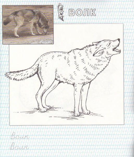 Раскраски с животными | Животные, Раскраски, Изображения ...
