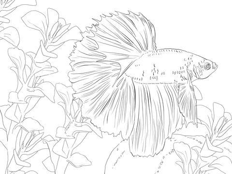 Kampffische Ausmalbilder Ausmalbilder Kampffische Fish Coloring Page Animal Coloring Pages Coloring Pages