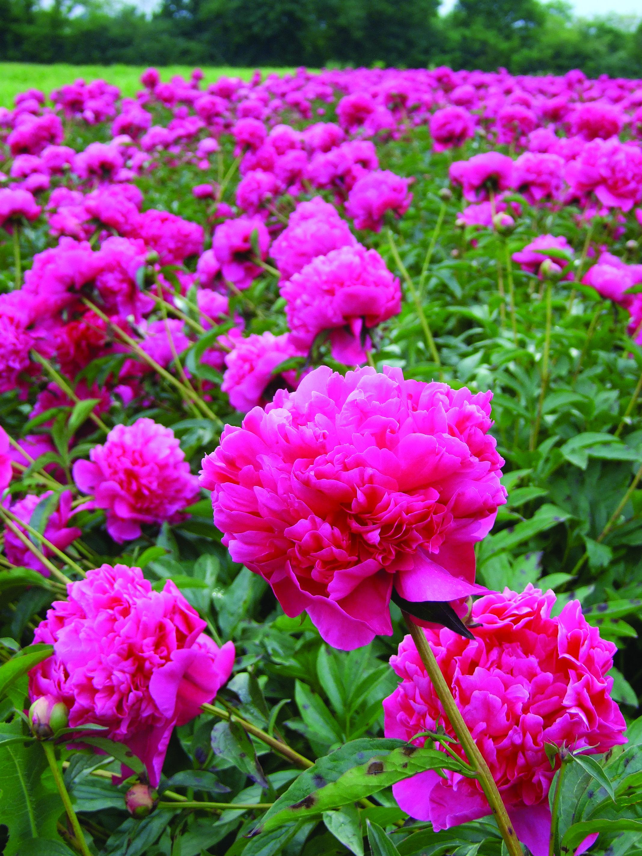 Savez-vous planter… les bulbes ? | Planter des bulbes, Bulbes, Saviez vous que