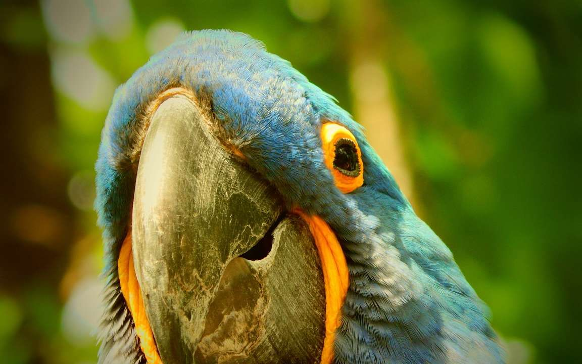Download Wallpaper 3840x2400 Macaw Parrot Beak 4k Ultra Hd 16 10