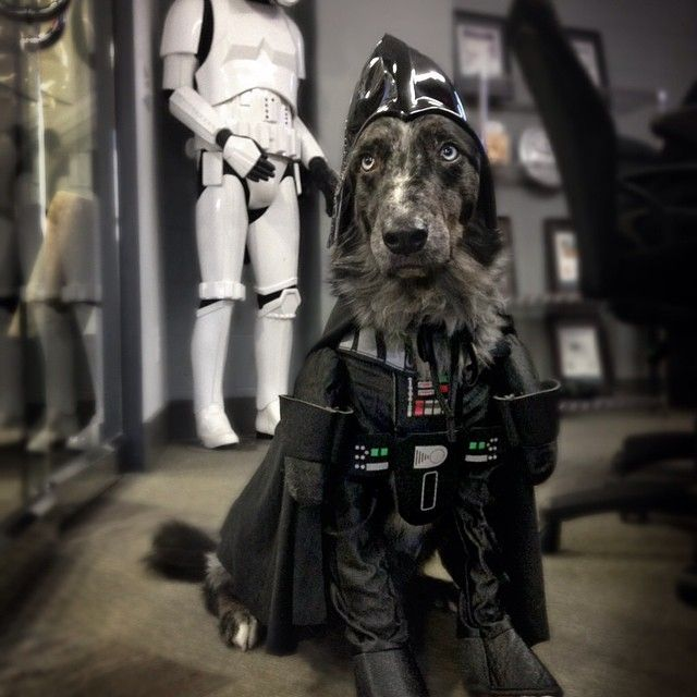 The cutest Vader on earth ^^ | #starWars #dog #darthvader #funidelia #cute #dogs
