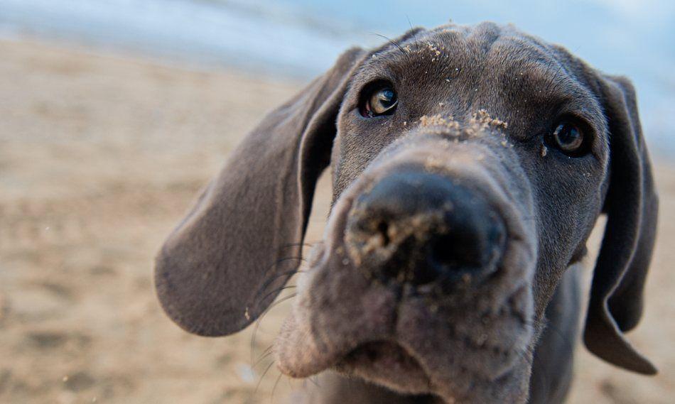 Verstehen Sie Ihren Hund? Sie möchten mit Ihrem Hund freundlich umgehen und ohne Gewalt Grenzen setzen? Dann sind Sie in der Hundeschule Symehu in Hannover ...