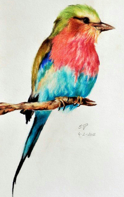 Epingle Par Diane Gaudreau Sur Peinture Dessin Oiseau Dessin D