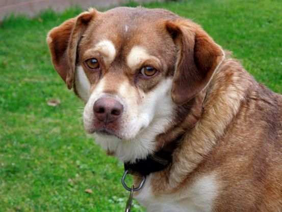 Cinnamon Appears To Be A 1 3 Yr Old Female Corgi Mix Weighing 25 35 Lbs She Was Found Along The Road With An Open Bag Of D Dog Adoption Animal Shelter Dogs