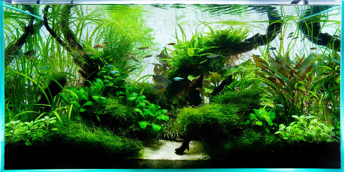 Aquarium design group 90cm ada aquascape aquarium for Ada fish tank