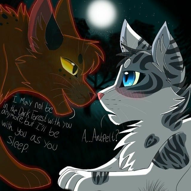 Antpelt truly liked Ivypool after he met her in the Dark forest
