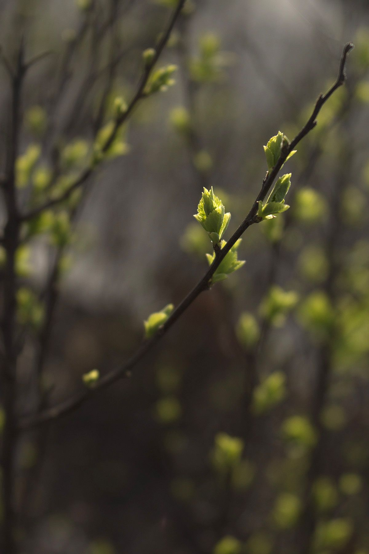 Spring 🌿 #photo #photography #spring #sprout #nature #canon #bud ...