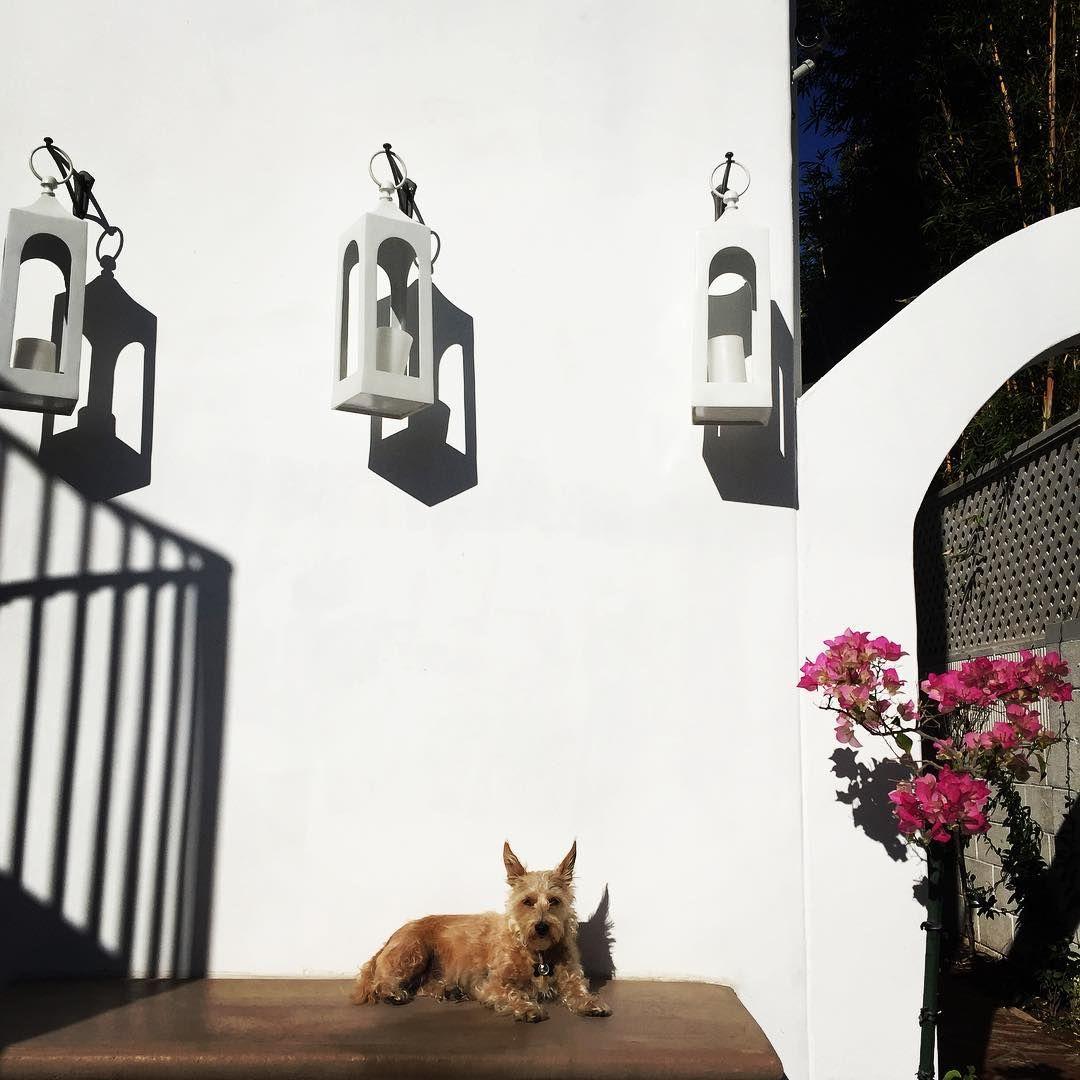 """55 aprecieri, 5 comentarii - FabFindsbylisa (@fabfindsbylisa) pe Instagram: """"Coco really loves her Sunny Spot 🌞🐶 #outdoorspace #lanterns #caleblantern"""""""