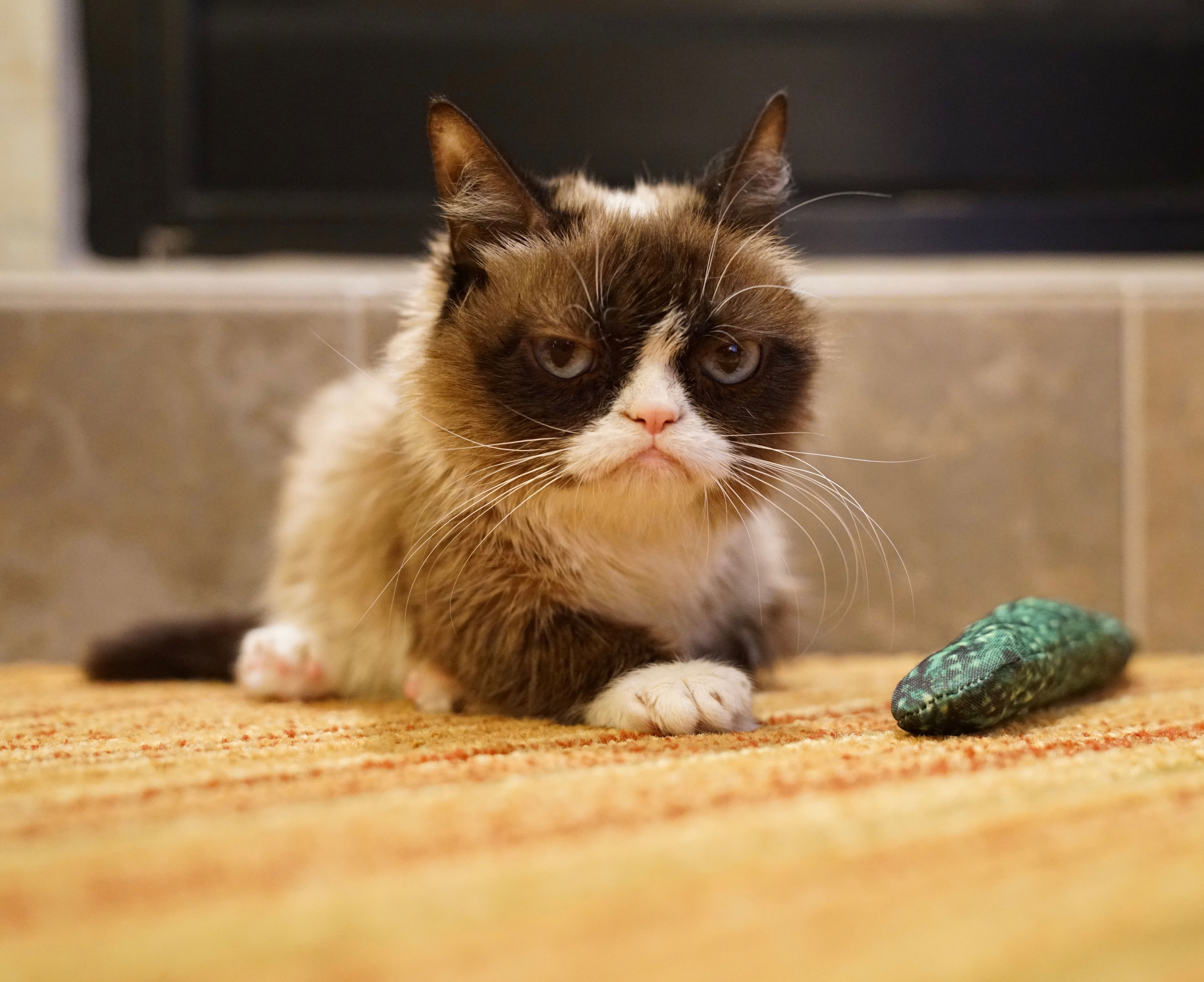 Grumpy Cat toys are available at PetSmart Meet the Grumpy Cat