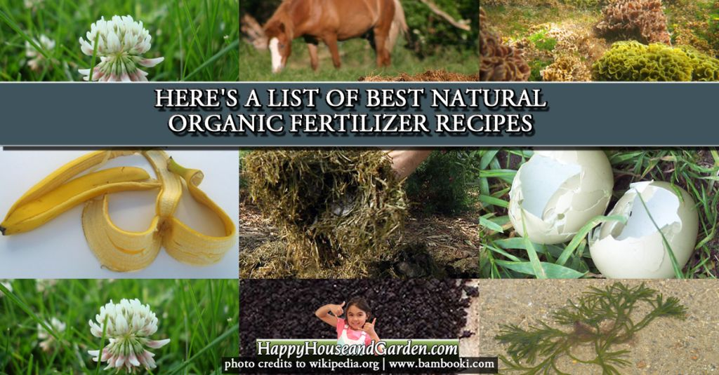 Here's a List of Best Natural Organic Fertilizer Recipes