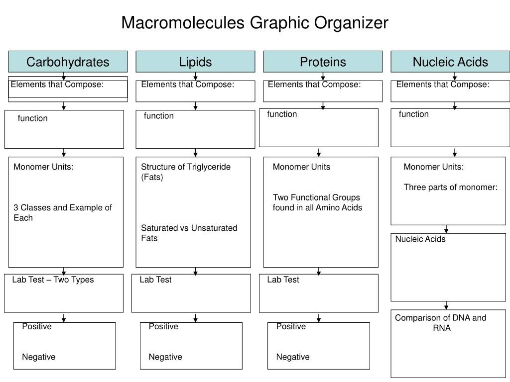 Biology Macromolecules Worksheet Answers