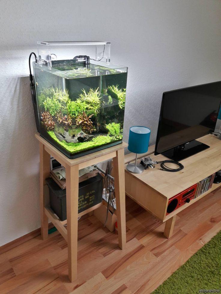 21 Best Aquascaping Design Ideas to Decor Your Aquarium ...