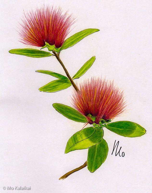 The Plant Lady: A Floral Coloring Book with Succulents and Flowers:  Amazon.de: Simon, Sarah, Paige Tate & Co.: Fremdsprachige Bücher