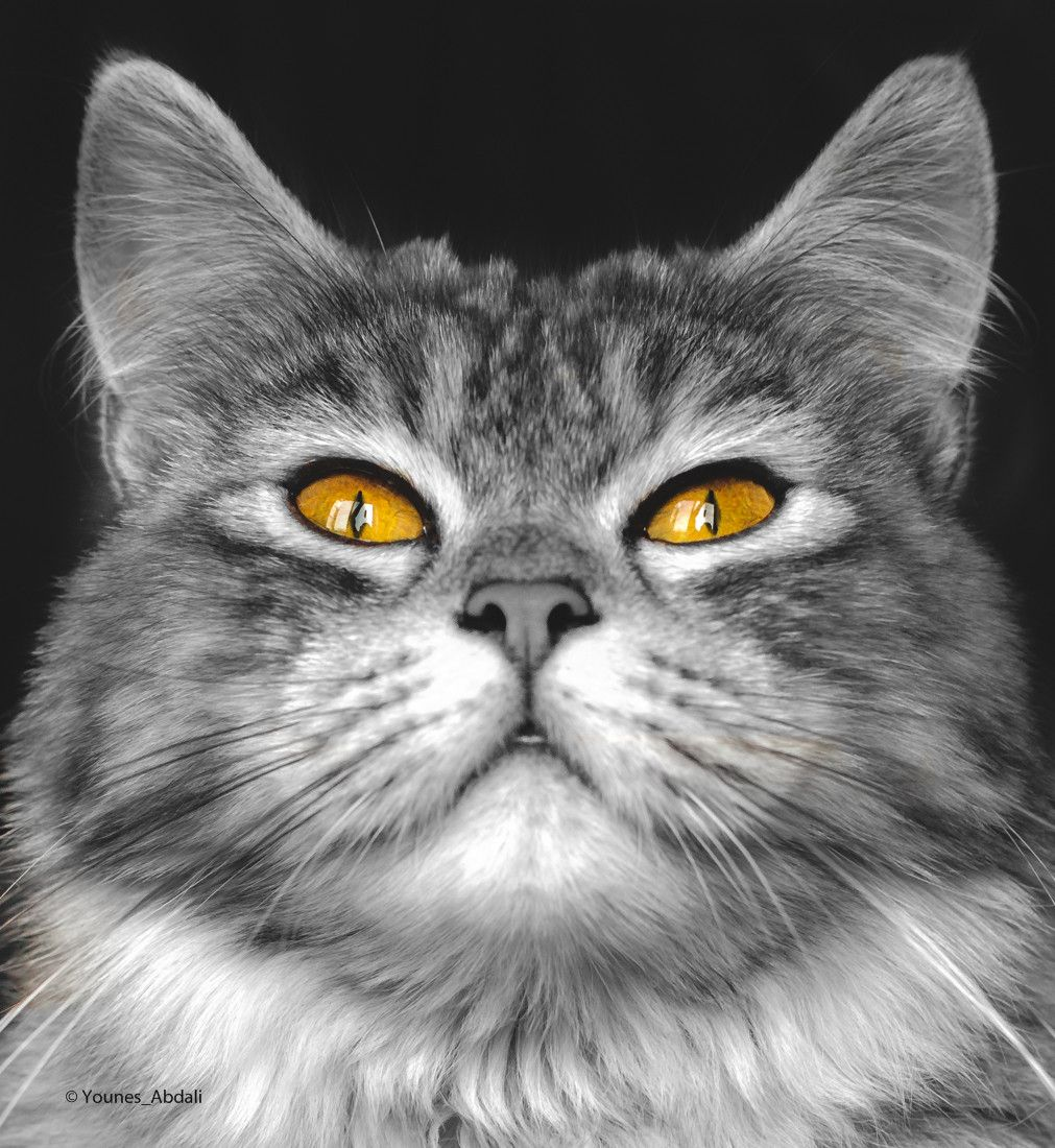 Photograph Scary cat (b&w) by Younes Abdali on 500px