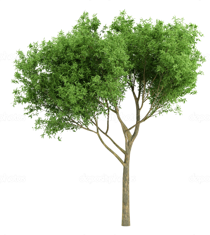 cutout tree Photoshop landscape Photoshop nature