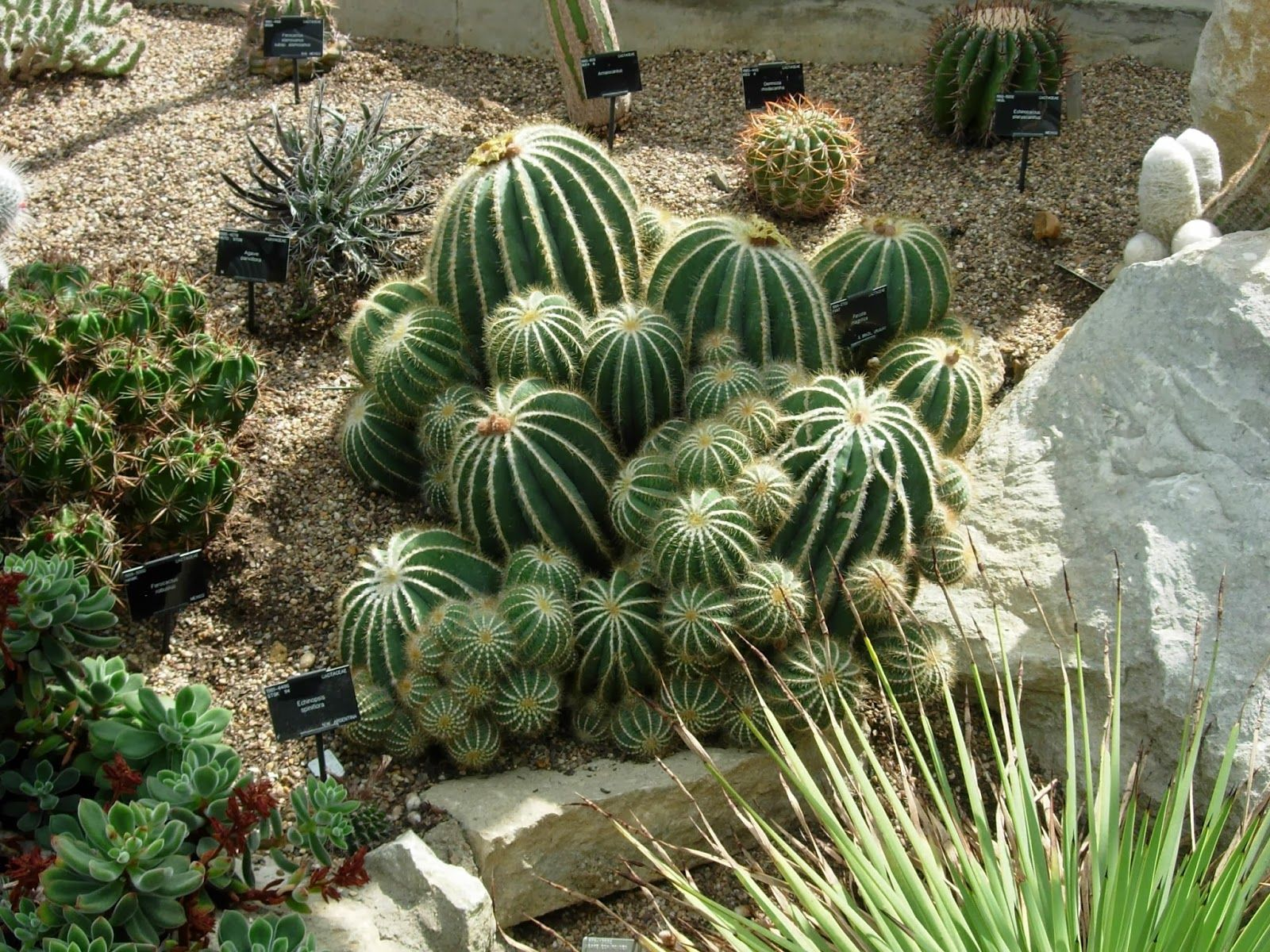 Monument Landscaping (With images) Xeriscape, Plants