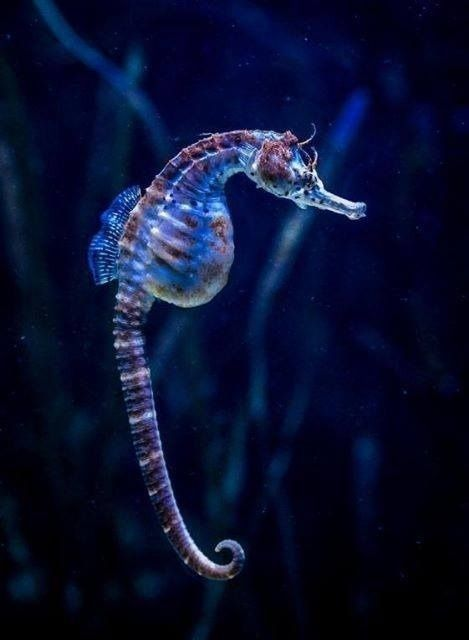 Seahorse Deep Sea Creatures Beautiful Sea Creatures Deep Sea