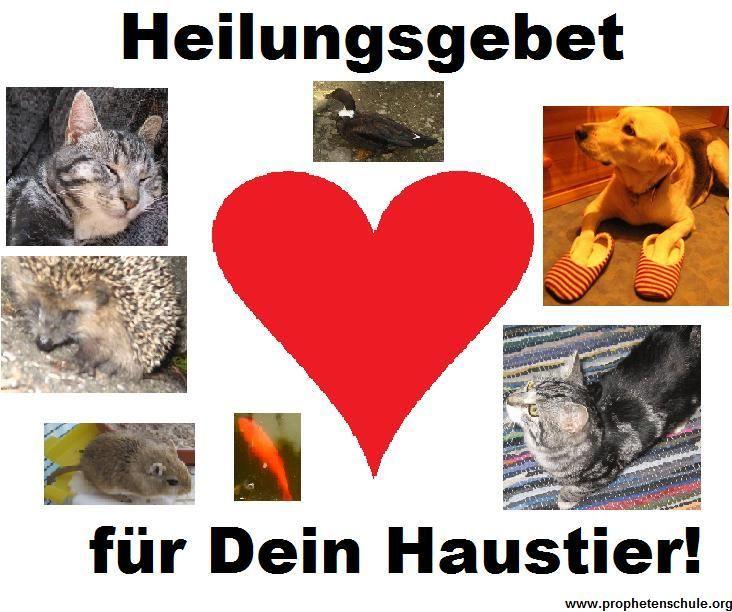 Heilungsgebet für Dein Haustier! (Heilung für Tiere)     healing for animals pets cats dogs