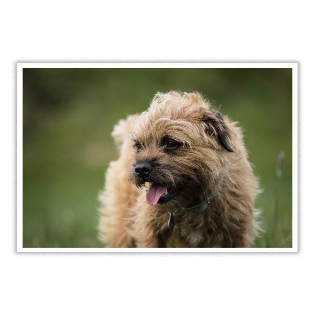 Border terrier dog lover 17 poster border terrier