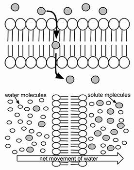 Cell Membrane Images Worksheet Answers Unique Cell ...