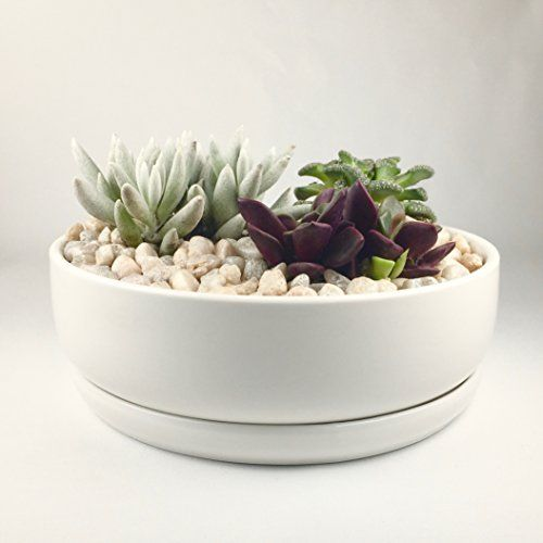 Maikai Products Shallow 6 Round White Ceramic Succulent Pot