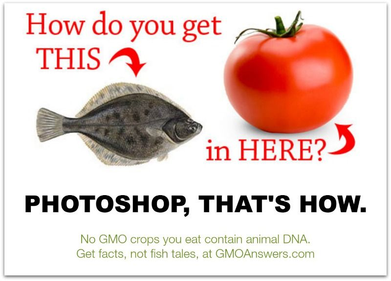 How Do You Get A Fish Into A Tomato You Don T There Are No