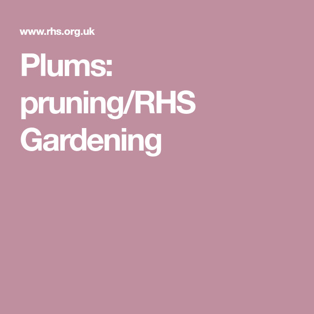 Plums: pruning/RHS Gardening | Prune, Plum, Rhs