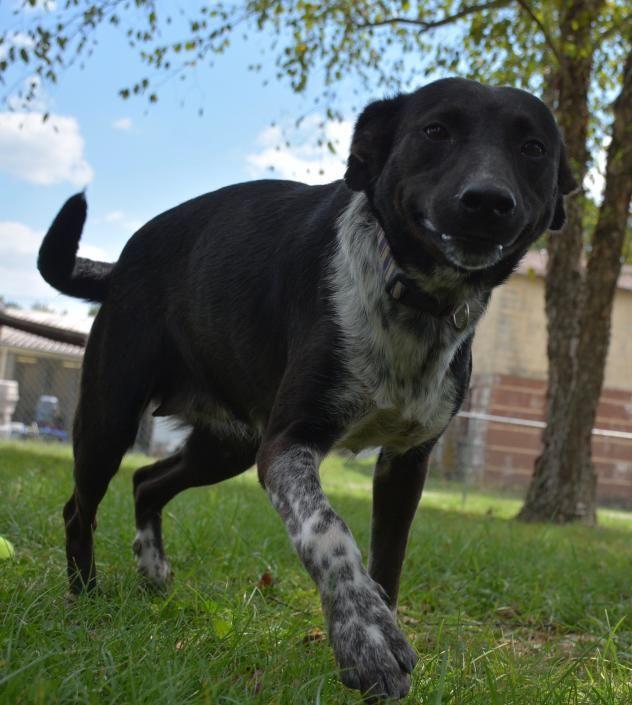 Adopt Marissa On Urgent Adoptable Pets Animals Dogs Pets