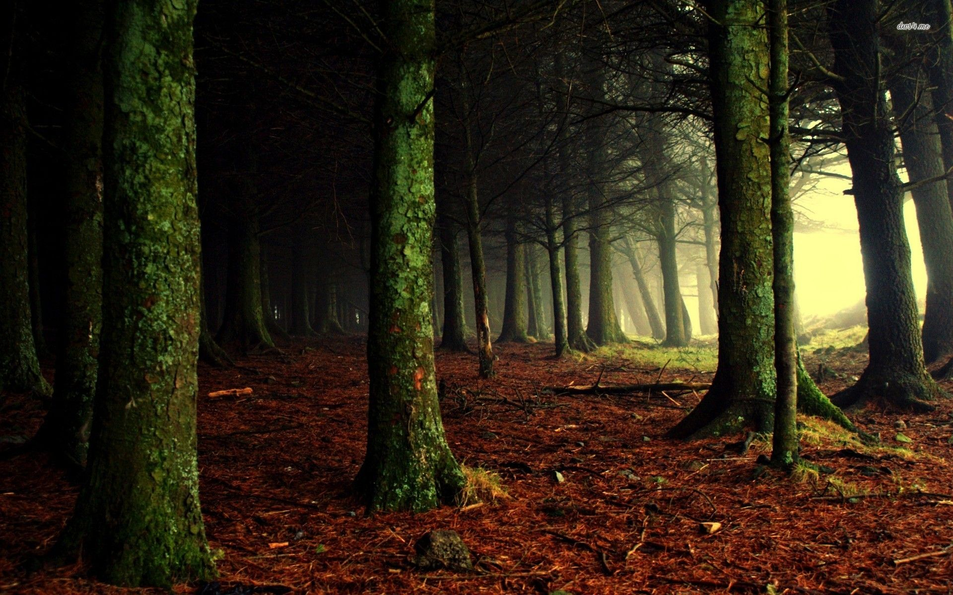 dark woods nature hd desktop wallpaper tree wallpaper forest wallpaper nature no