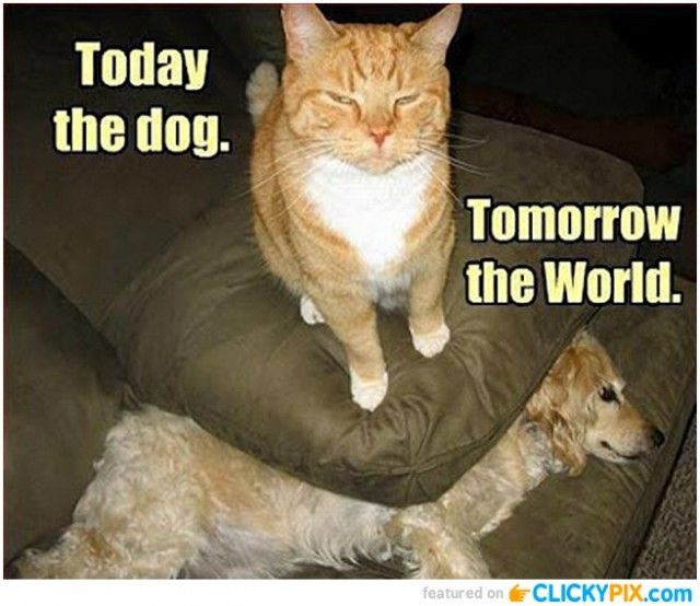 Cat world domination