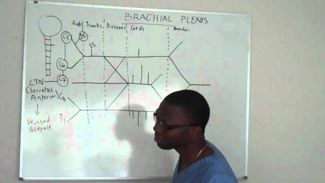 Brachial plexus made ridiculously simple PART 2 -Lecture   Anatomy ...