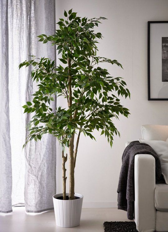 Artificial House Plants Living Room Formal Ideas With Piano 5 Times That Fake Make The Cut Or Do They In 2019 Diy Apartment Therapy