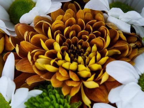 اجمل بوكيه ورد طبيعي صور اجمل بوكيه ورد طبيعي جميل Zina Blog Plants Succulents