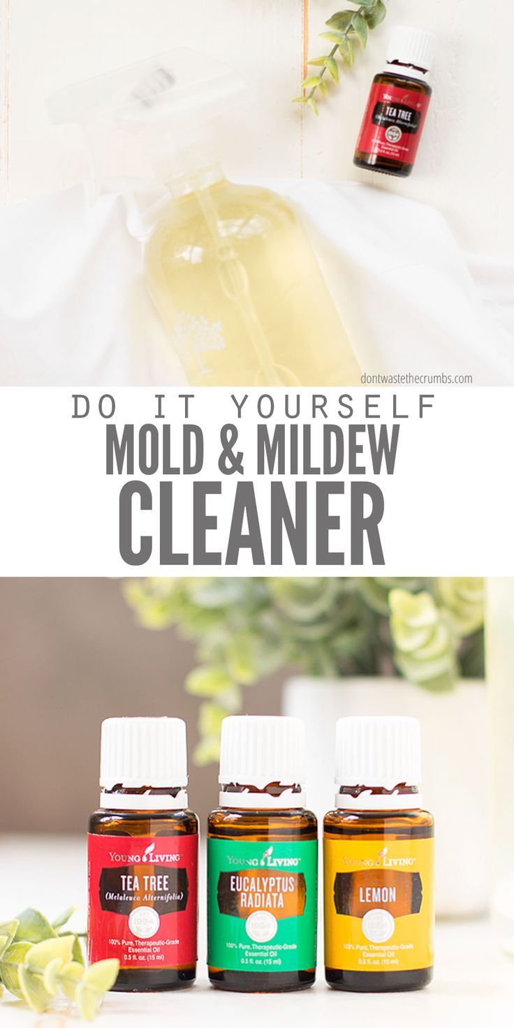 How to Get Rid of Mold and Mildew Using Essential Oils