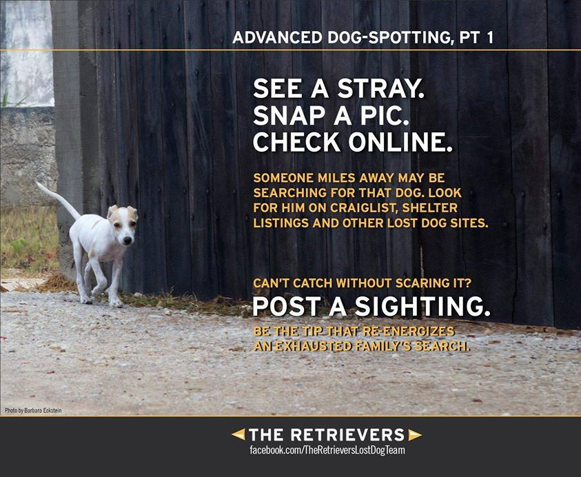 Advanced DogSpotting Tip 1 from The Retrievers, because