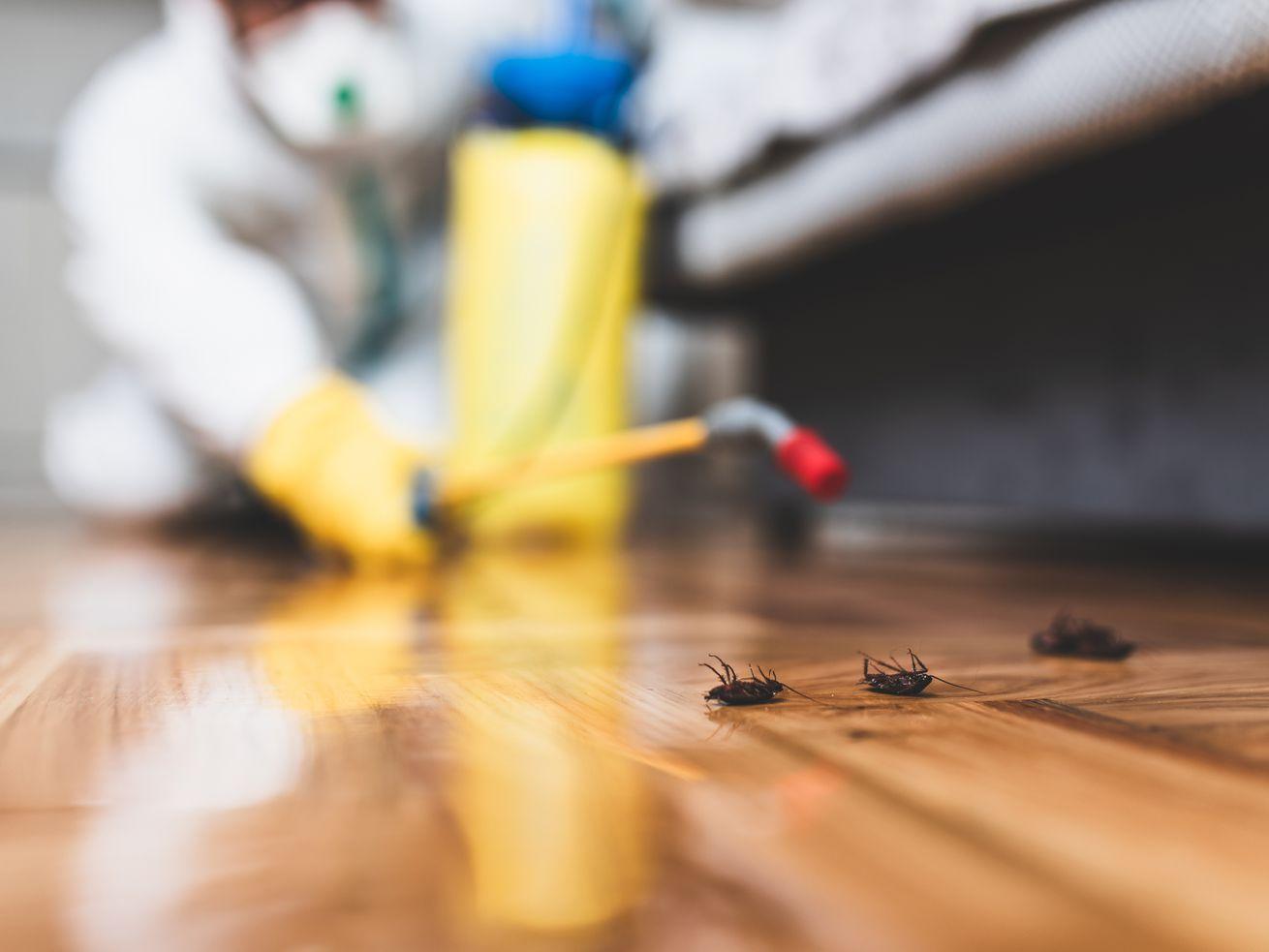 Orkin Vs Terminix Termite Control Household Pests Pest Control