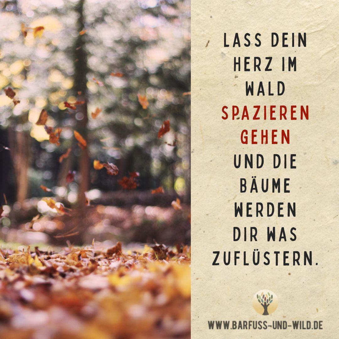 Lass Dein Herz Im Wald Spazieren Gehen Und Die Baume Werden Dir Was Zuflustern Zitate Natur Weisheiten Zitate Herbst