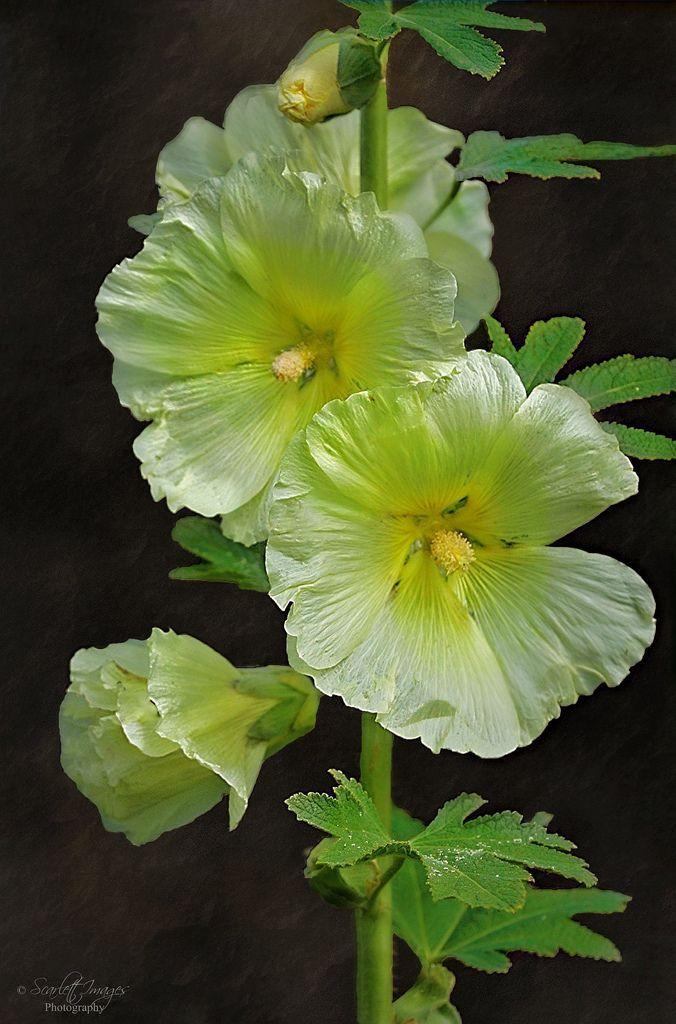 Pin by 温 艺钧 on Flower Beautiful flowers garden