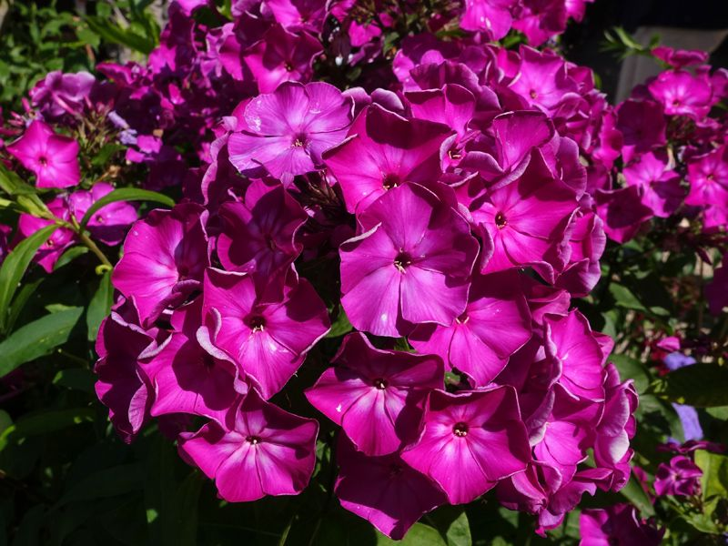 Vivaces pour un jardin de curé | Jardin de curé, Jardins et Jardin foret