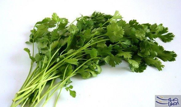 نبات الكزبرة تطرد السموم خارج جسم الانسان وتقيه من الأمراض الطبيعة من حولنا غنية بالخيرات التي تعود بالنفع على كل عضو من Herbs Essential Herbs Bean Recipes