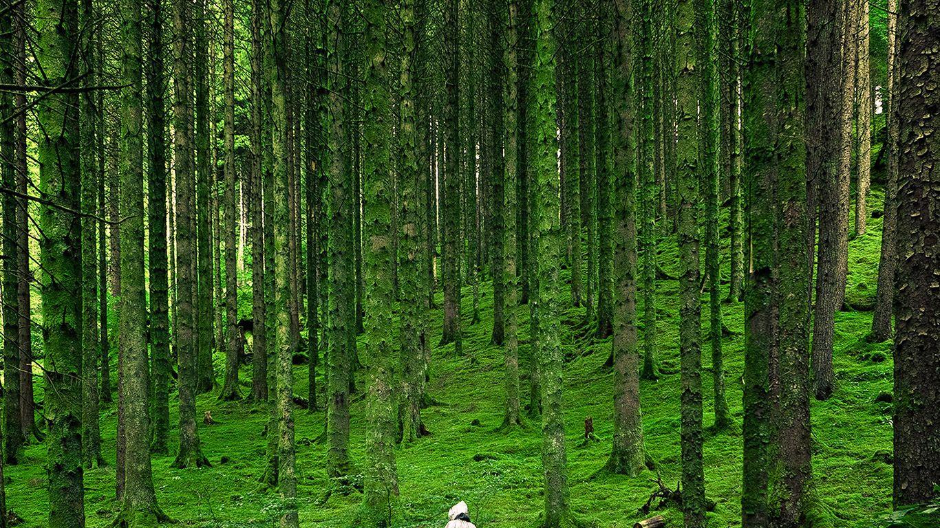 Beautiful Wallpaper Macbook Forest - 1230d02326aba3040e354e69b151f346  Trends_346861.jpg