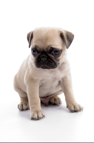 Cute puppy sitting and waiting Embrace pet insurance