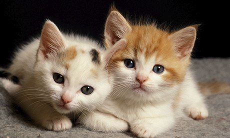 Cats | sweet | Baby cats, Kittens cutest, Cute baby cats